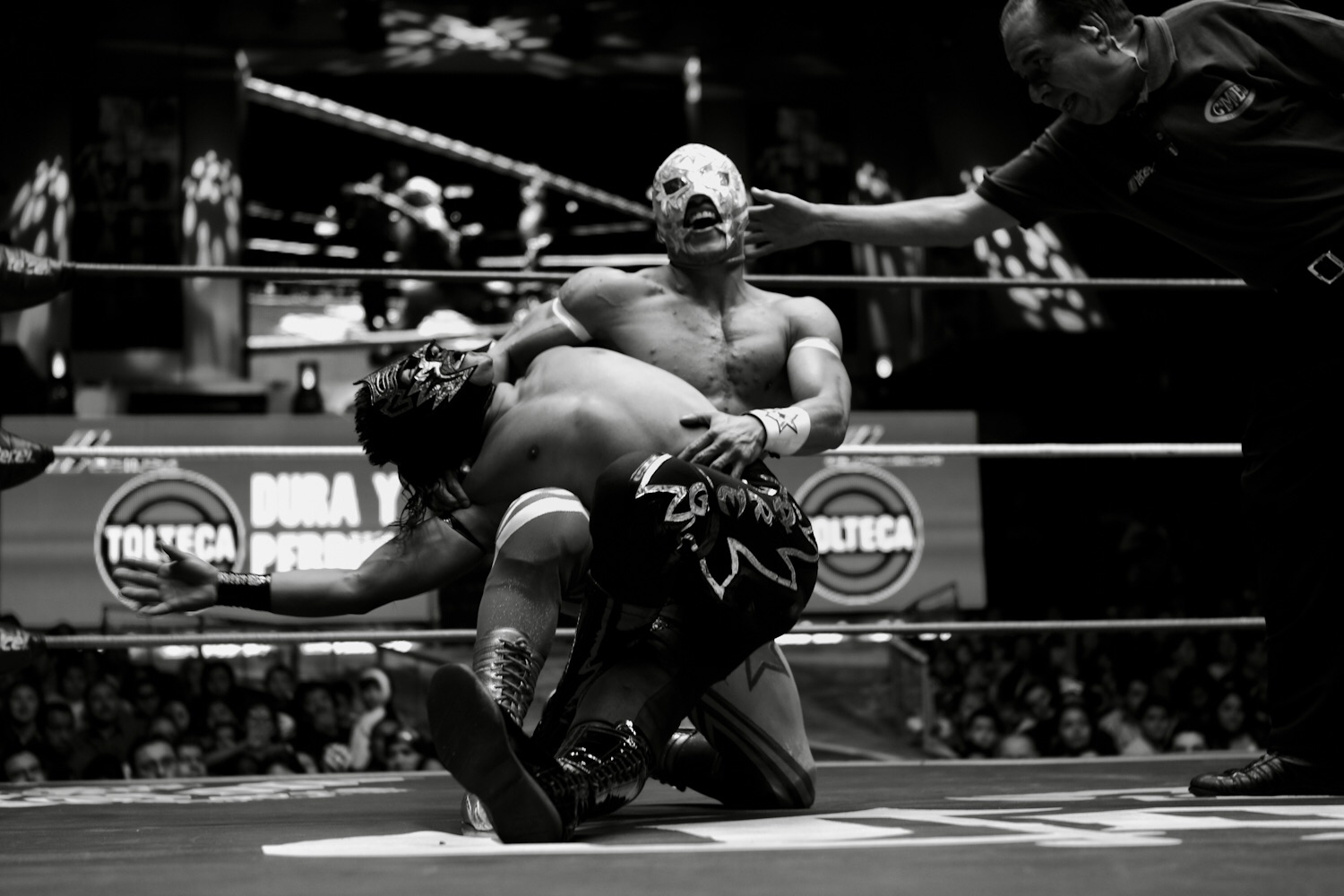 Related Keywords & Suggestions for lucha libre mexicana