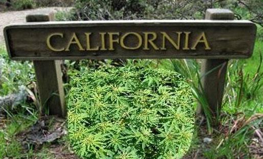 California Dream's